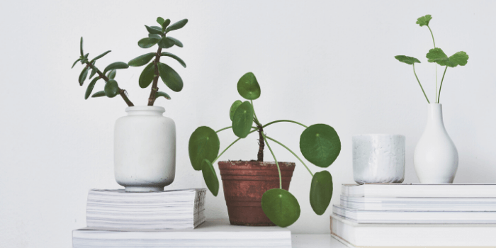 Actually learn the names of your houseplants